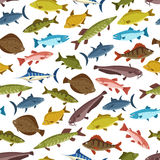 Fish seafood seamless pattern background design. Fish seafood seamless pattern background of swimming tuna, salmon, trout, perch, bass, marlin, flounder Royalty Free Stock Images
