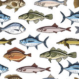 Fish Seamless Pattern. Fish collection. Dorado, Fish Eel, Tuna, Salmon, Halibut, Herring, Sea bass, Cod, Sturgeon. Vector illustration for design menus Royalty Free Stock Photos