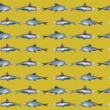 Fish seamless pattern, sardine stock illustration