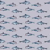 Fish seamless pattern, sardine royalty free illustration