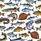 Fish seamless pattern for seafood design vector illustration