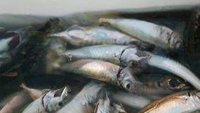 Fish season opened stock footage