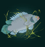 Fish in seaweed  vector Stock Photo
