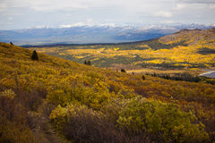 Fish See-Hinterwanderung, Whitehorse, Yukon-Fall-Landschaft Stockfotografie