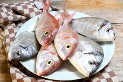 Fish selection fresh prepared for cook Stock Photography
