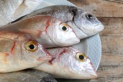 Fish selection fresh prepared for cook Royalty Free Stock Photo