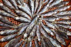 Fish. Sell fresh fish in market of thailand Stock Images