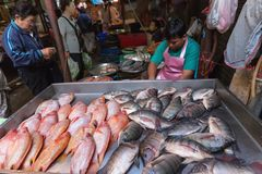 Fish seller in Asian market Stock Photography