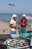 Fish seller in Barka, Oman Royalty Free Stock Image