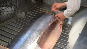 Fish seller measuring tuna fish for set the price. In Tsukiji seafood market, Japan stock footage