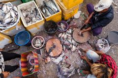 Fish seller in Myanmar Royalty Free Stock Photos
