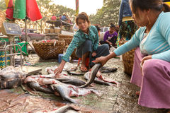 Fish seller in Myanmar Stock Photography