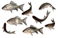 fish set isolate Royalty Free Stock Photo