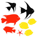 Fish. Set. Isolated objects on white background. Vector illustration Royalty Free Stock Images