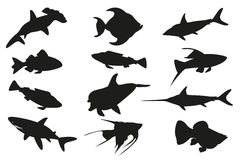 Fish set isolated on white background. Vector illustration Stock Images