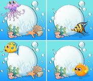 Fish. Set of 4 sea creatures underwater Royalty Free Stock Photo