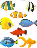 Fish set. Fish Tropical Fishes Shoal, with eight 8 different fish in different colors and sizes. Fish  illustration cartoon Stock Images