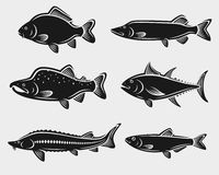 Fish set. Vector Royalty Free Stock Images
