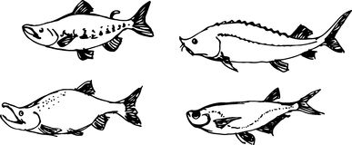 Fish set. Vector illustration Royalty Free Stock Photography
