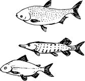 Fish set. Vector illustration Royalty Free Stock Photos