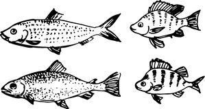 Fish set. Vector illustration Stock Image