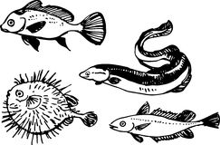 Fish set. Vector illustration Royalty Free Stock Image