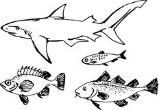 Fish set. Vector illustration Royalty Free Stock Images