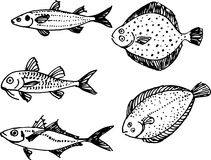 Fish set. Vector illustration Stock Photography