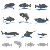 Fish set. Vector Stock Photo
