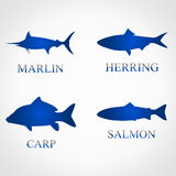 Fish set. vector illustration. Fish set vector illustration. marlin, herring, carp, salmon Royalty Free Stock Photos