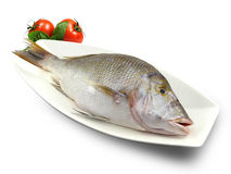 Fish (Shaour) Stock Photo