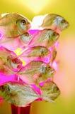 Fish-shaped lamp shade, close-up Royalty Free Stock Photography