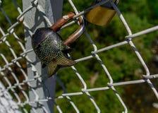 Fish shaped padlock.tif Stock Image