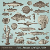 Fish, Shells And Seafood Stock Image