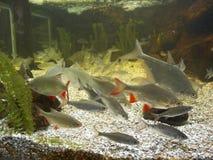 Fish shoal. Kotka maretarium Royalty Free Stock Photos
