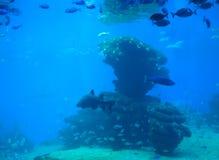 Fish shoal shark Royalty Free Stock Image