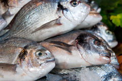 Fish in the shop Royalty Free Stock Photography