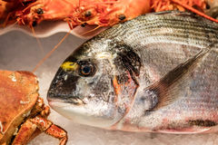 Fish shop display with beautiful fresh sea bream and crustaceans Royalty Free Stock Images