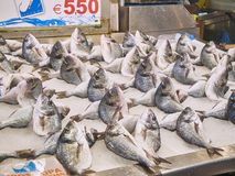 Fish shop of Varvakios, Central Market of Athens. Attica region, Greece. Athens, Greece - July 2, 2018. Gilt-head breams in a fish shop of Varvakios, Central royalty free stock images
