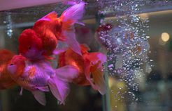 Fish show at Fashion Island in Thailand stock photography