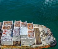 Fish, shrimp, scampi and squid shown on the boat near the fish market royalty free stock image