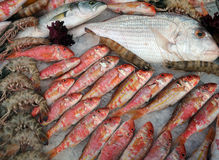 Fish And Shrimps On Ice. Seafood and fish on ice on the Turkish market Royalty Free Stock Photography
