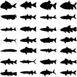 Fish sihouette. Layered vector illustration of different kinds of fish  silhouette Royalty Free Stock Images