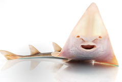 Fish skate Stock Photography