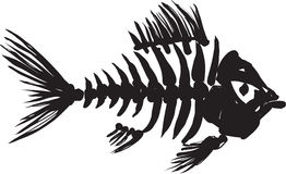 Fish skeleton. Primitive, rough image of fish skeleton in black on a white background Royalty Free Stock Photos