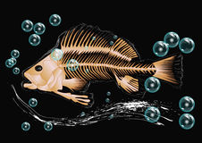 Fish skeleton and bubbles Royalty Free Stock Photography