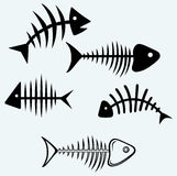 Fish skeleton Royalty Free Stock Photo