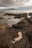 Fish skeleton lying on rocks Royalty Free Stock Image