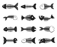 Fish skeleton set. Black and white bones, basic structure of a fish, framework of bones. Vector flat style cartoon illustration isolated on white background Stock Photos