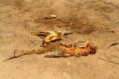 Fish skeleton on shore Stock Image